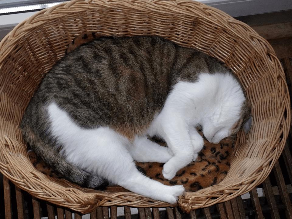 Best-Cat-Beds