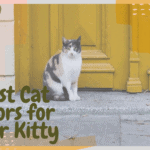 Best Cat Doors for Your Kitty