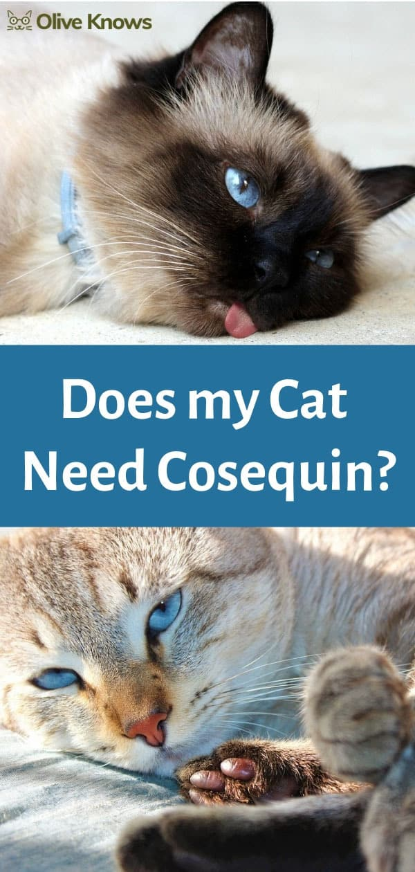 does my cat need cosequin