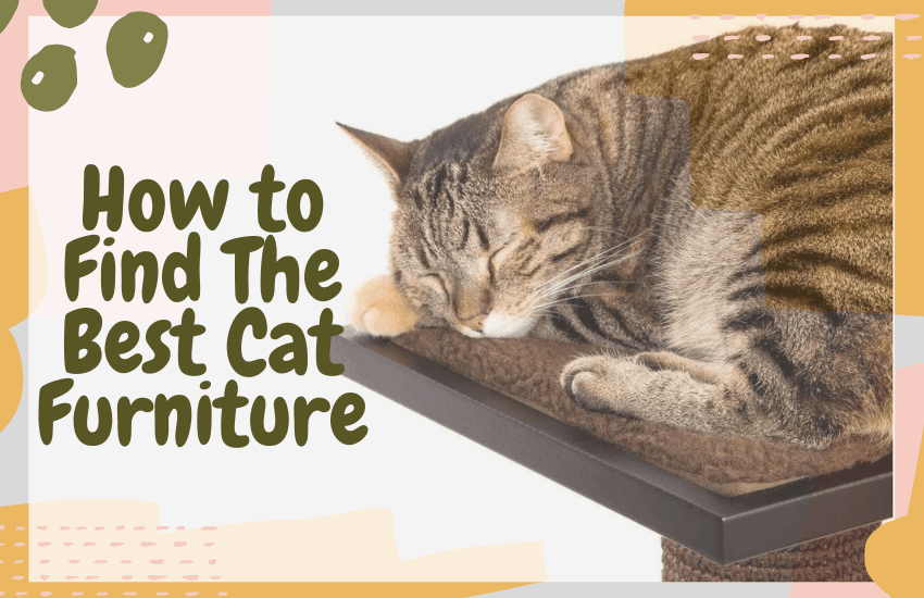 How to Find The Best Cat Furniture