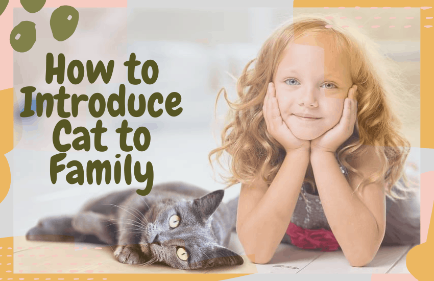 How to Introduce Cat to Family