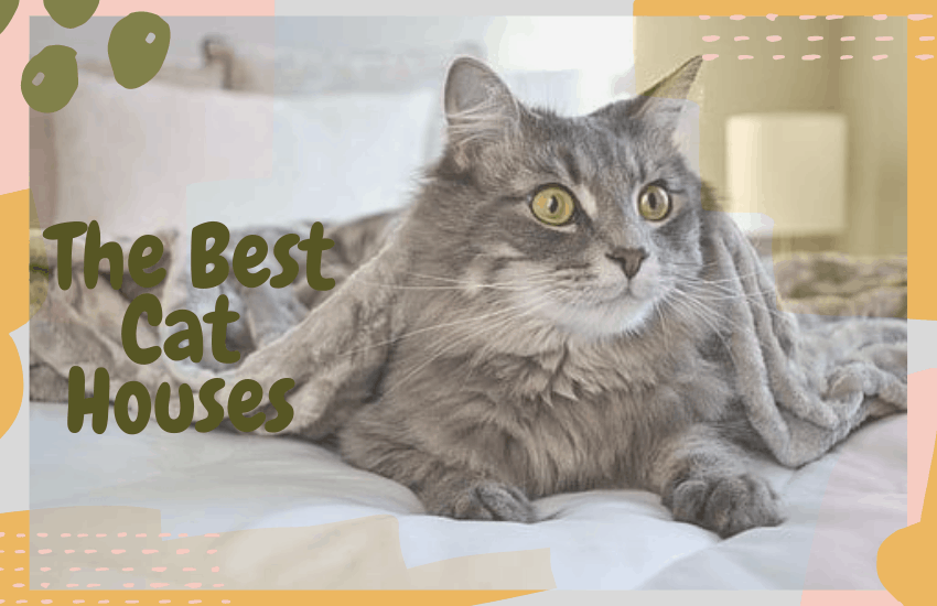 The Best Cat Houses