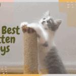 The Best Kitten Toys