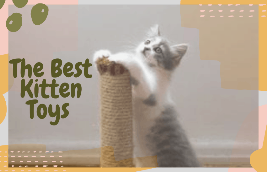 The Best Kitten Toys
