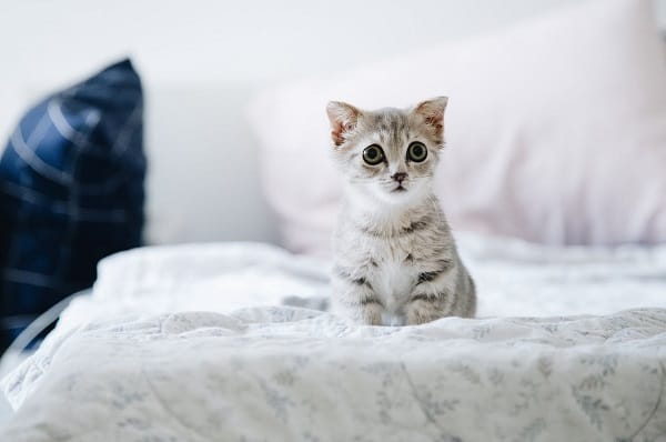 When Can You Bring Home a Kitten