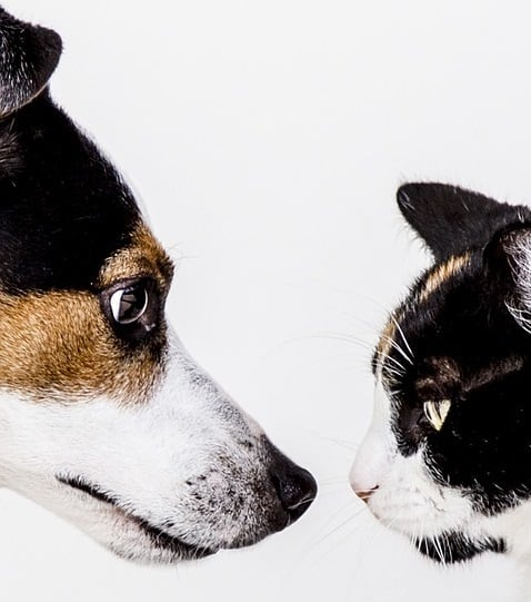 are cats smarter than dogs