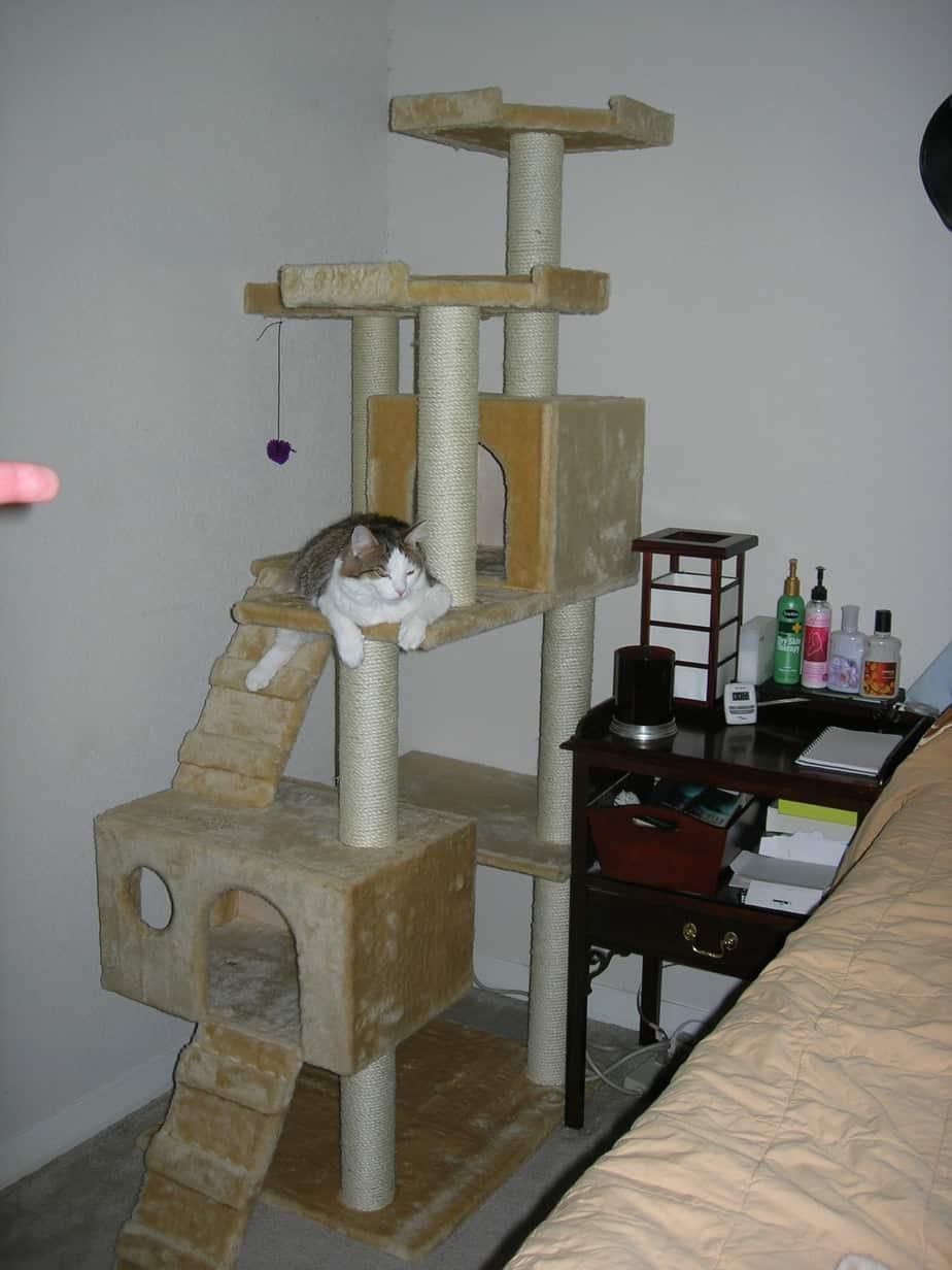 kitty-in-cat-tree