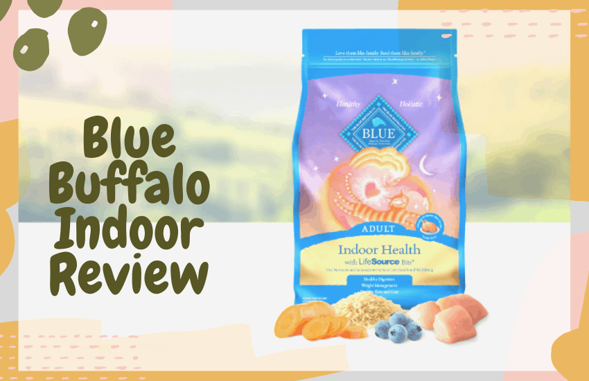 Blue Buffalo Indoor Review