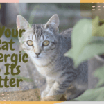 Is Your Cat Allergic to Its Litter