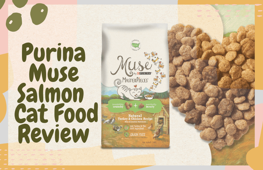 Purina Muse Salmon Cat Food Review