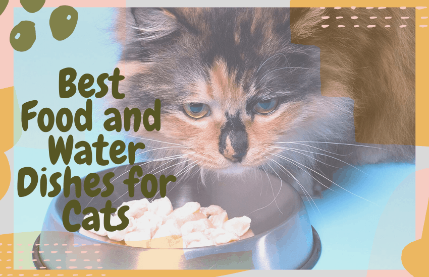 Best Food and Water Dishes for Cats