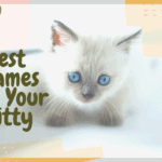 Best Names For Your Kitty