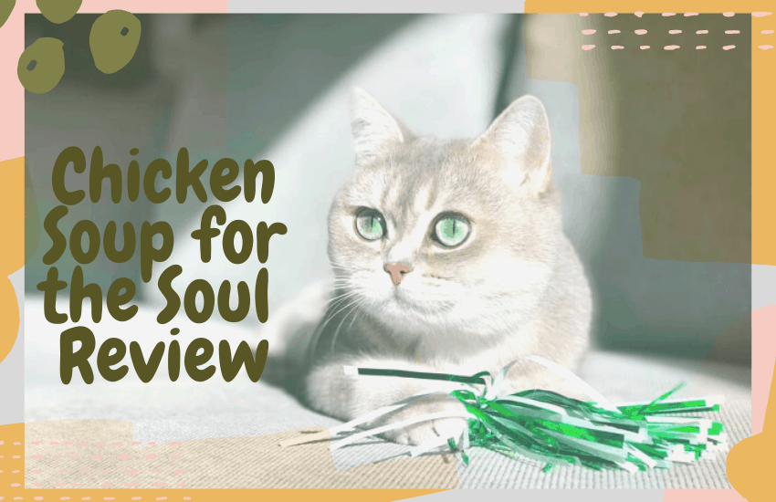 Chicken Soup for the Soul Review