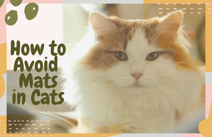 How to Avoid Mats in Cats
