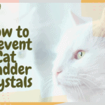 How to Prevent Cat Bladder Crystals