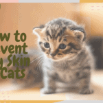 How to Prevent Dry Skin in Cats