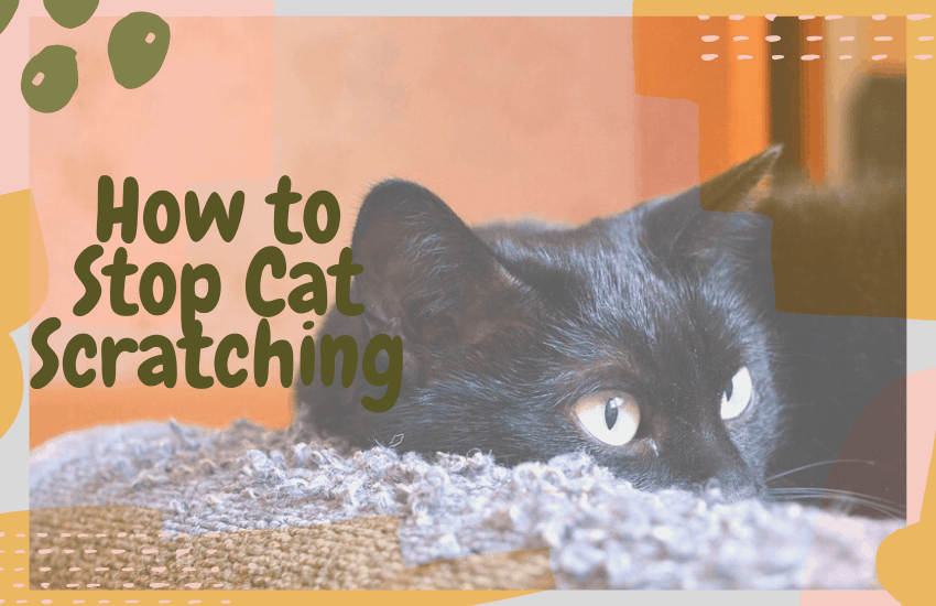 How to Stop Cat Scratching