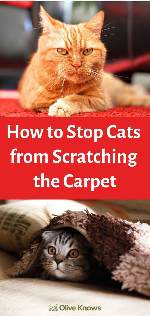 How To Stop Cats From Scratching The Carpet Oliveknows