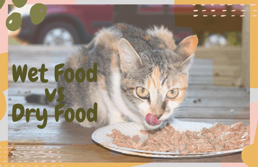 Wet Food vs Dry Food