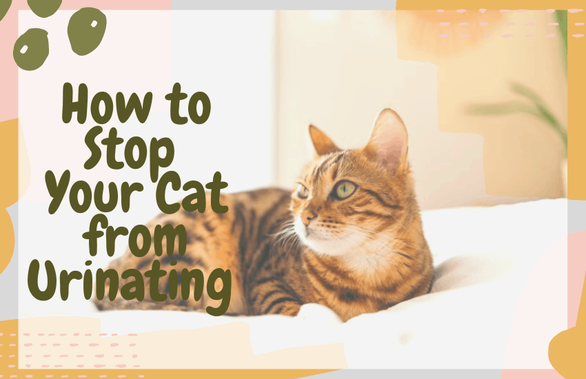 How to Stop Your Cat from Urinating