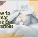 How to Treat Feline Eye Infections