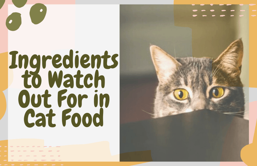 Ingredients to Watch Out For in Cat Food