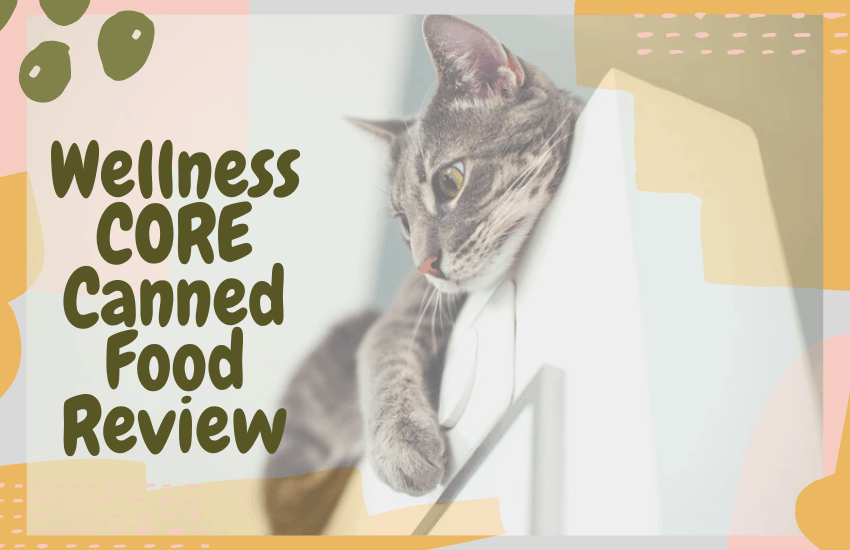 Wellness CORE Canned Food Review