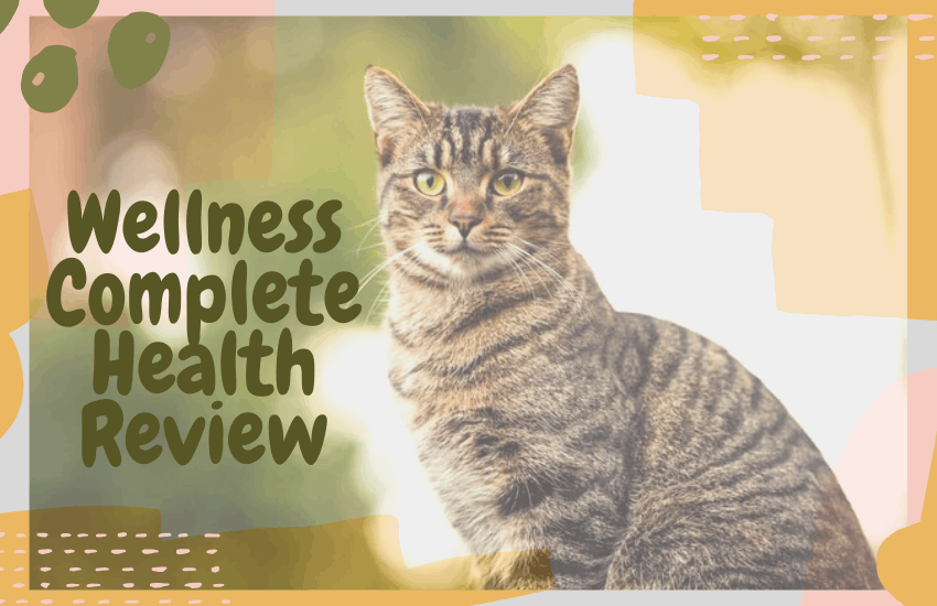 Wellness Complete Health Review