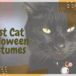 Best Cat Halloween Costumes