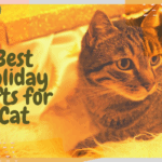 Best Holiday Gifts for Cat