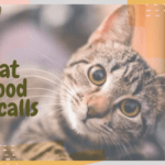 Cat Food Recalls