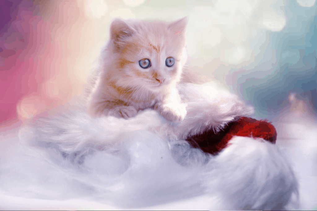 The Best Gifts For Cat Oliveknows