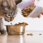 best cat food hyperthyroidism