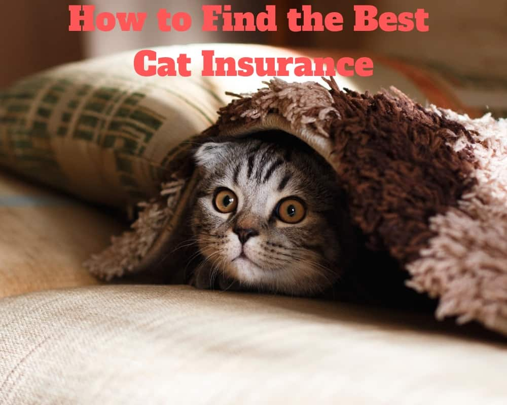 How to Find the Best Cat Insurance
