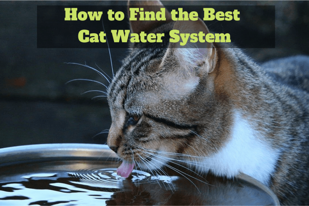 Find Best Cat Water System
