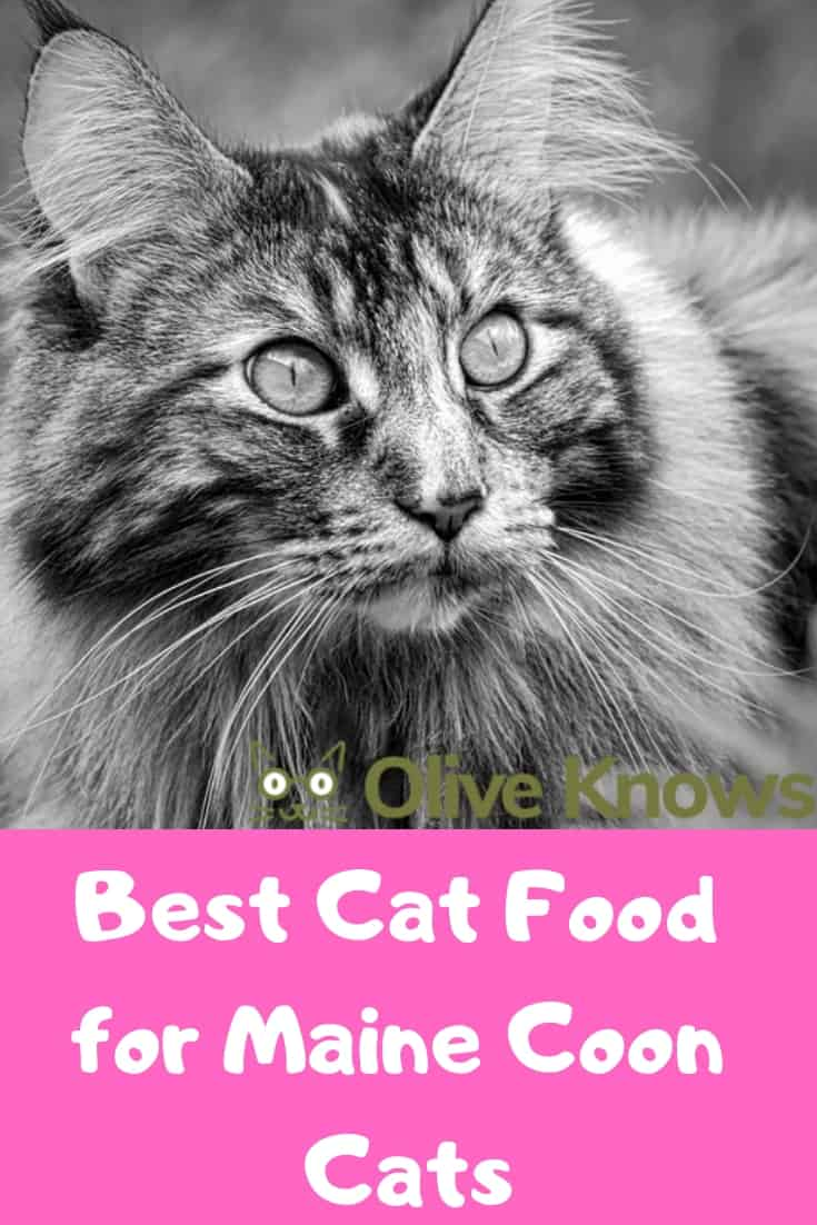 Best Cat Food Maine Coon Cats