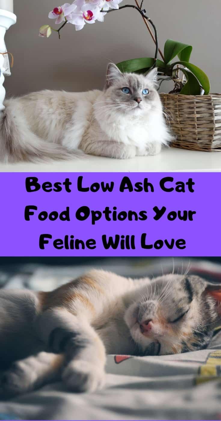 Best-Low-Ash-Cat-Food-Options