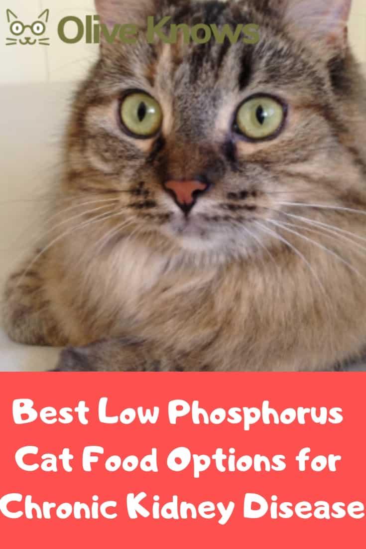 Low-Phosphorus-Chronic-Kidney-Disease