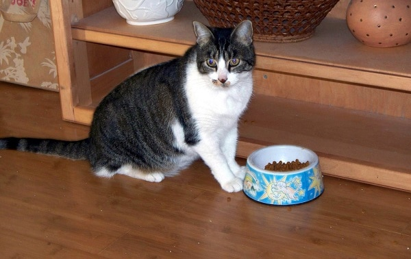 Cat-Dry-Food