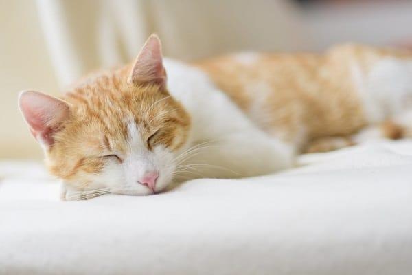 Cat-Insurance-Petplan