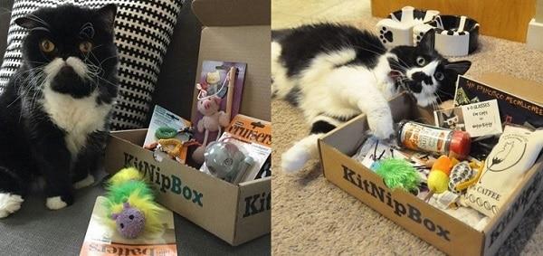 Cat-Kitnipbox-Subscription