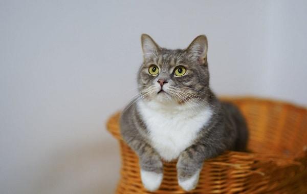 Cat-Subscription-Box