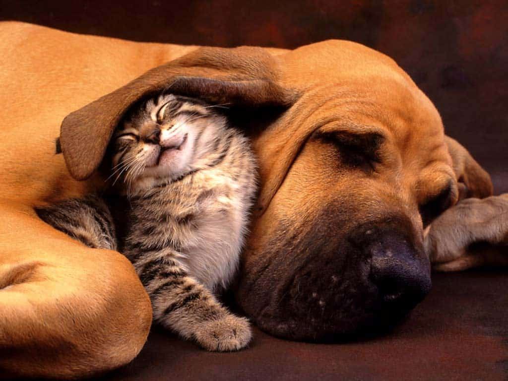 Cat-and-Dog-Pet-insurance