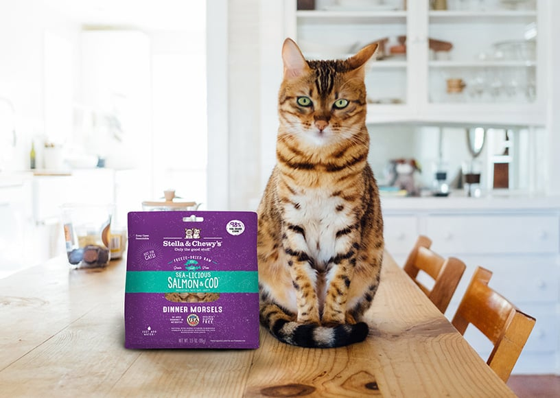 Chewy-Cats-Pet-Food-Supplier