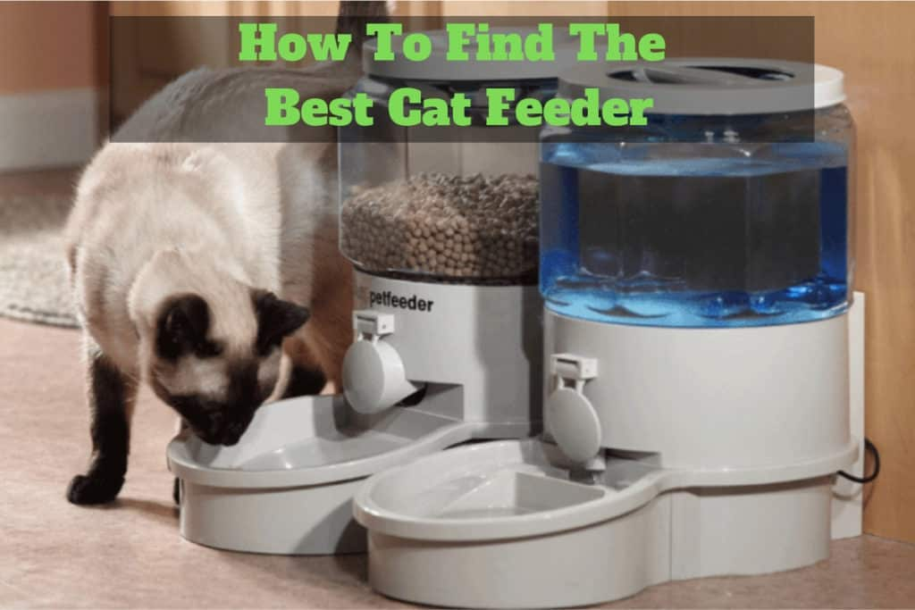Best Cat Feeder