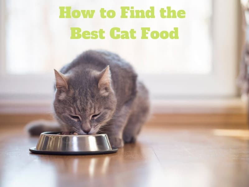 How-to-Find-the-Best-Cat-Food
