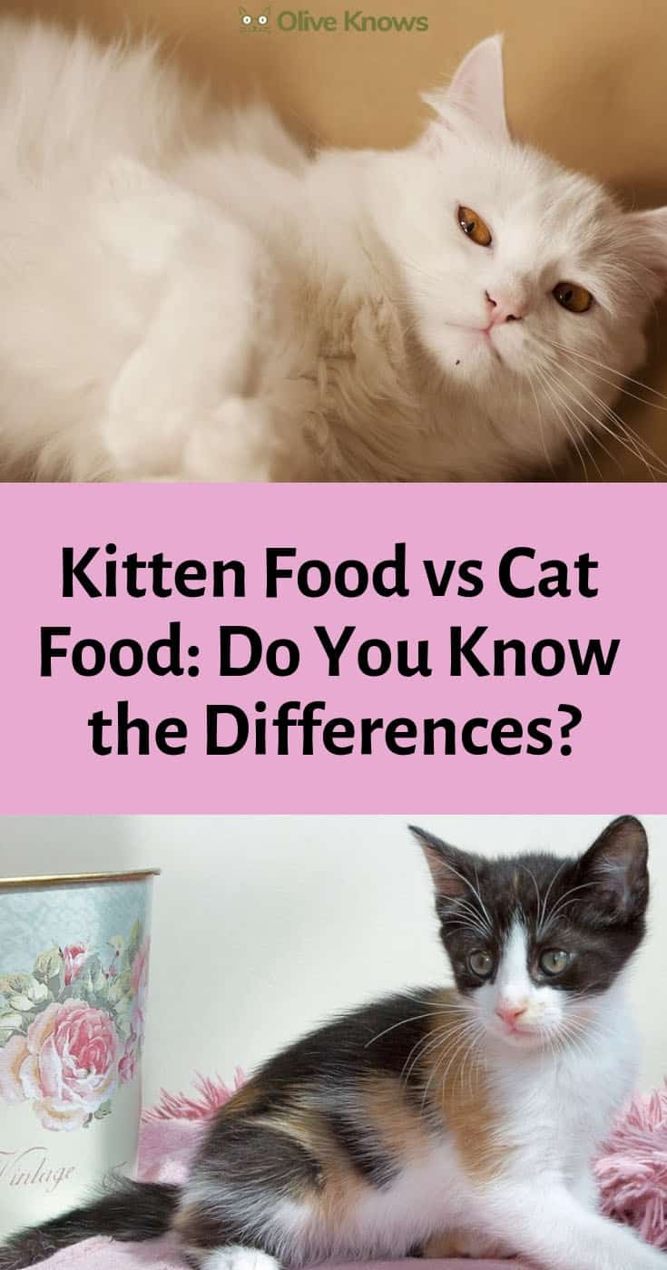 Kitten Food Vs Cat Food Do You Know The Differences Oliveknows