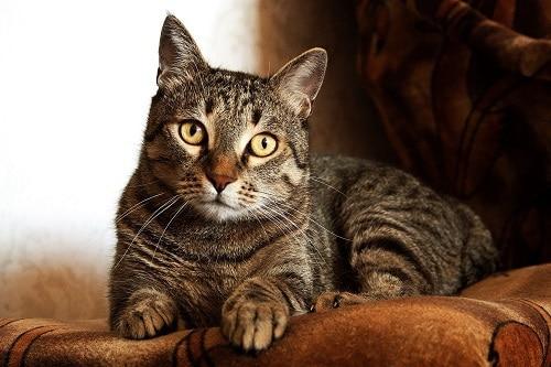 Orijen-Cat-Food-Review