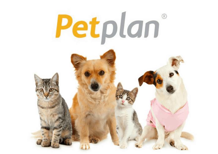 Petplan-Pet-Insurance