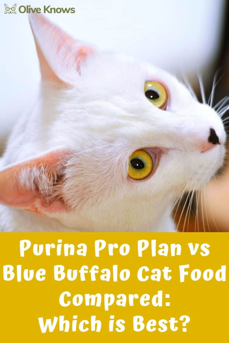 Purina Pro Plan vs Blue Buffalo Cat Food Compared: Which is